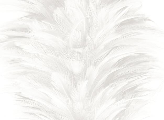 Fond de texture plume blanche