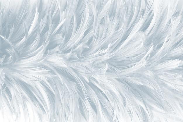 Fond de texture de plume blanche
