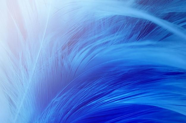 Fond de texture de plume bleue.