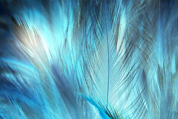 Fond de texture plume bleue