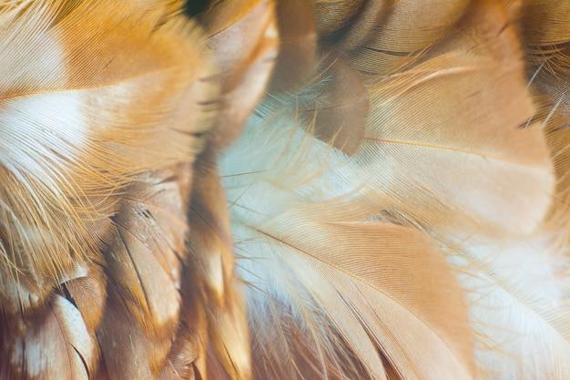 Fond de texture de plume de poulet