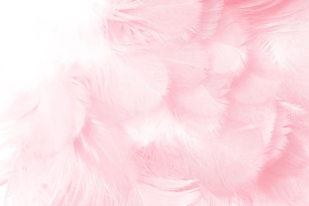 Fond de texture plume rose corail