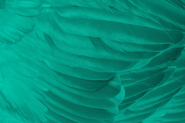 Fond de texture de plume turquoise vert