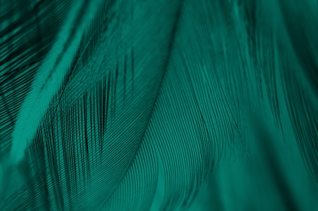 Fond de texture de plume verte