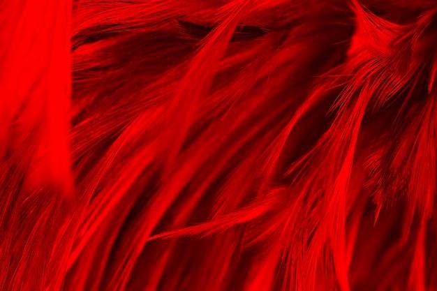 Fond de texture de plumes rouges