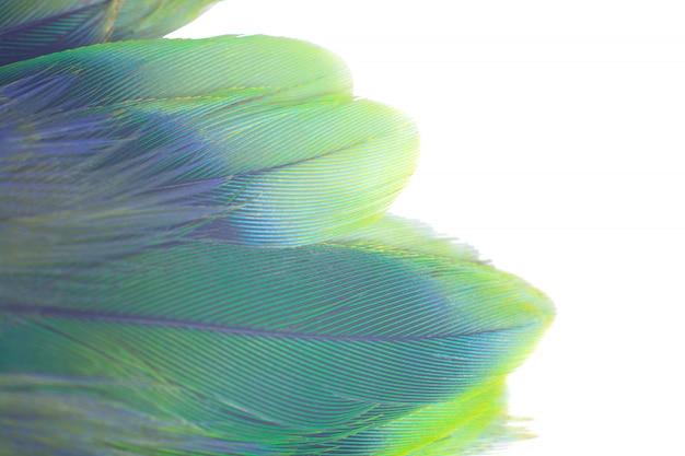 Fond de texture de plumes vert turquoise et bleu