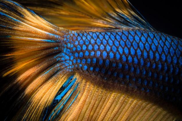 Fond de texture de poisson betta