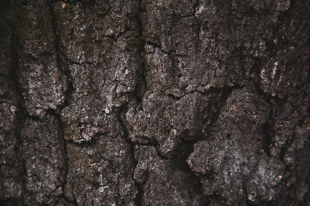 Fond de texture en relief de l'écorce brune d'un arbre. papier peint pour appareil