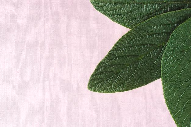 Sur un fond texturé rose, les feuilles de viorne sont ridées. les feuilles sont situées dans le coin supérieur droit.