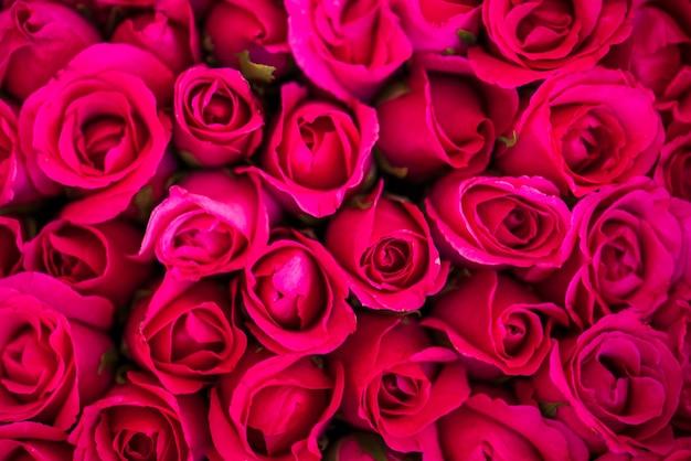 Fond texturé de roses rouges