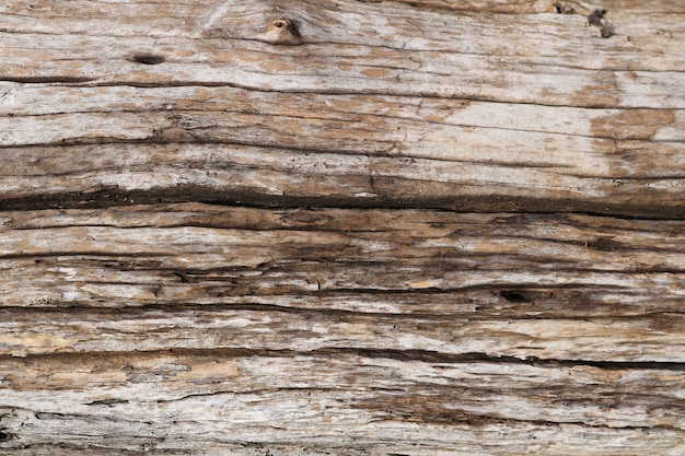 Fond de texture de souche d'arbre