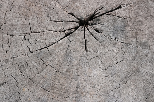 Fond de texture de tronc d'arbre