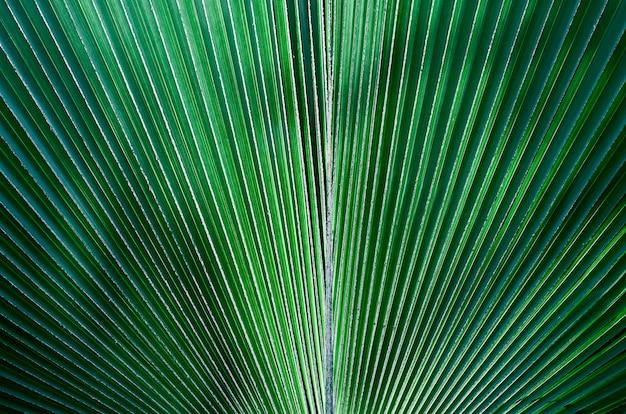 Fond de texture tropicale de feuille verte