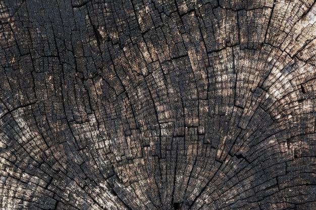 Fond avec la texture d'un vieil arbre scié.