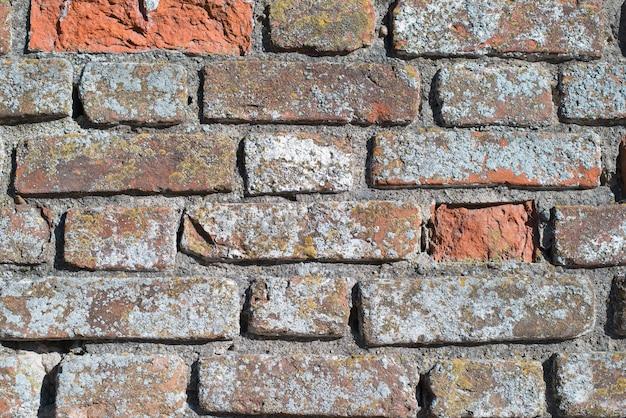 Fond texturé d'un vieux mur de briques rouges, gros plan à l'extérieur. mousse, moisissure, brique brute