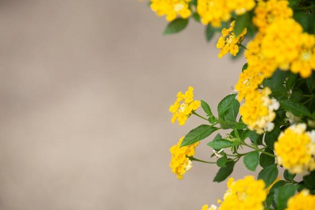 Fond de tissu de fleur d'or.