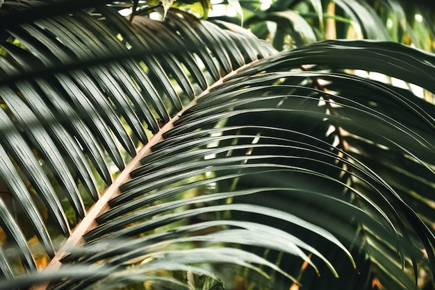 Fond tropical de branche de palmier incurvé