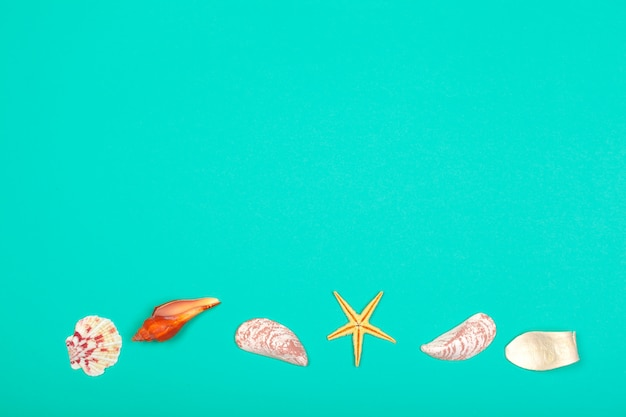 Fond tropical. seashell sur fond coloré de la mode moderne.
