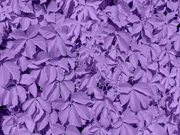 Fond ultra violet fait de feuilles