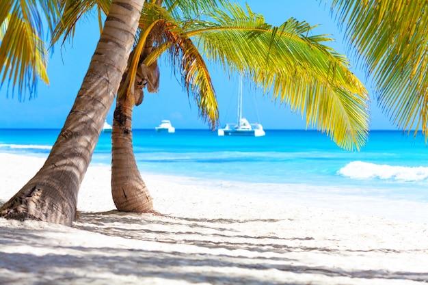 Fond de vacances vacances d'été - plage paradisiaque des caraïbes tropicales ensoleillées avec sable blanc et palmiers