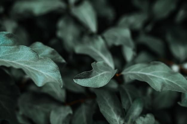 Fond vert avec des feuilles sur un buisson