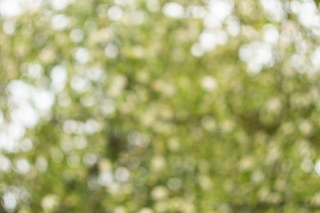 Fond vert flou avec beau bokeh