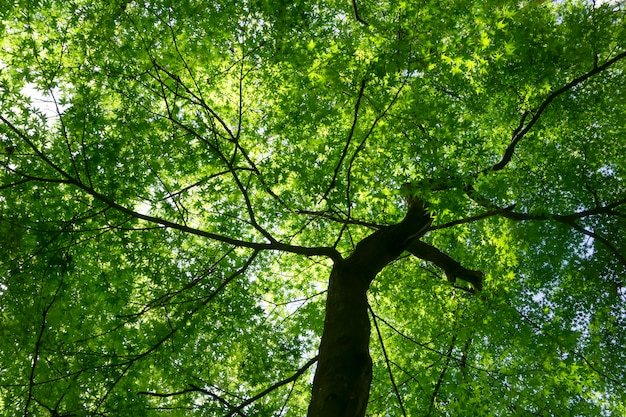 Fond vert grand arbre