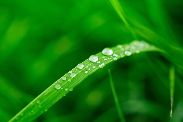Fond vert de l'herbe fraîche