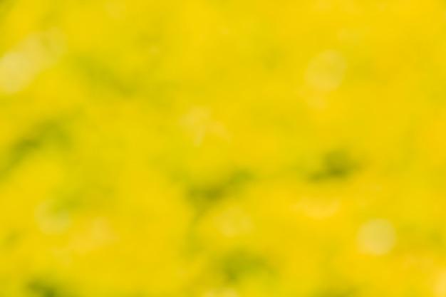 Fond vert avec lumière naturelle