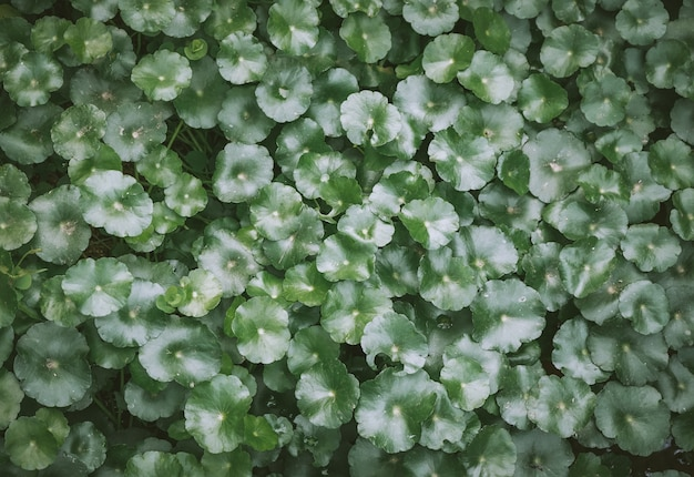 Fond vert naturel de feuilles vertes avec filtre vintage