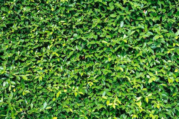 Fond vert naturel de feuilles vertes