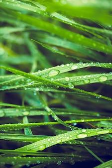 Fond vert par l'herbe fraîche