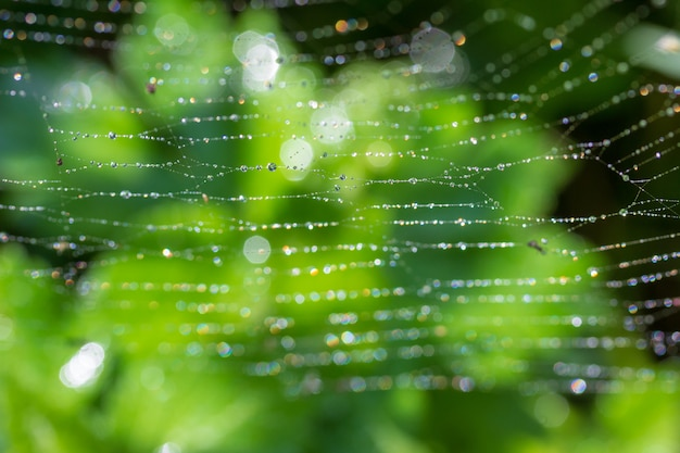 Fond vert avec la rosée du printemps ou l'été sur une toile d'araignée