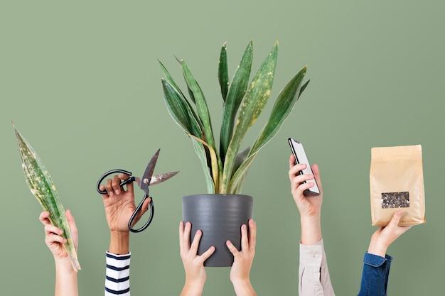 Fond vert de vendeur de plantes en ligne