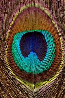 Fond vertical de gros plan de plumes lumineuses et colorées de paon.