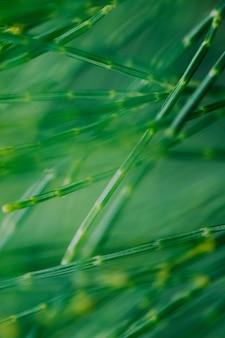 Fond vertical d'herbe verte