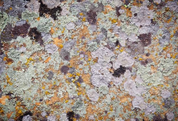 Fond de vieille texture de mur en pierre avec de la mousse
