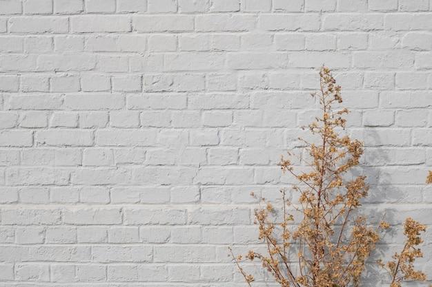 Fond de vieux mur de briques gris et plantes sèches d'or