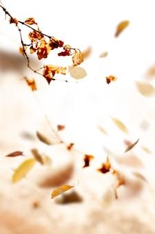 Fond vintage de feuilles séchées