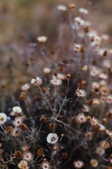 Fondo de plantes et fleurs de bosque.