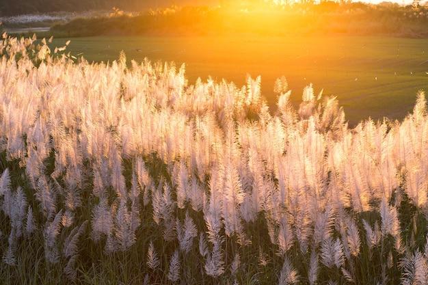 Fontaine herbe dans la lumière du soleil.