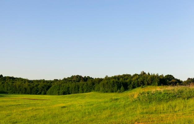 Forêt et arbres individuels poussant sur un territoire vallonné vert, paysage d'été