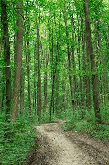 Forêt arbres nature vert bois lumière du soleil arrière-plans