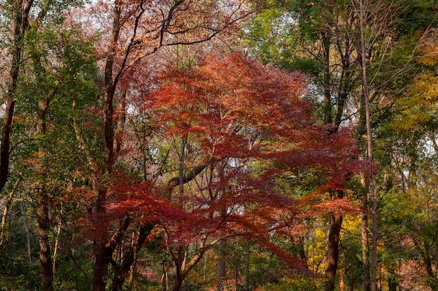 Forêt avec des arbres se bouchent