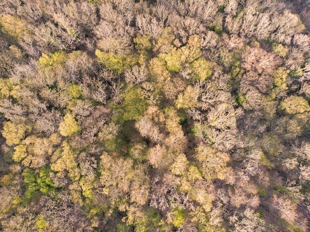 Forêt au début de l'automne vue de dessus réserve sans fin