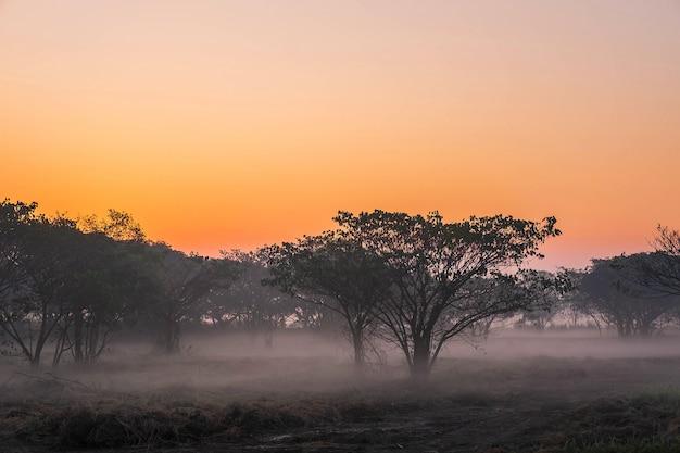 La forêt à l'aube est couverte de brouillard.