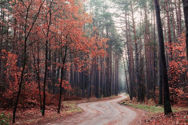 Forêt automnale mystique avec brouillard