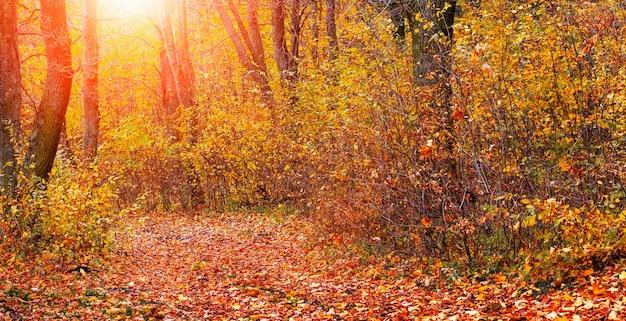 Forêt d'automne avec des arbres colorés et une route couverte de feuilles tombées au coucher du soleil. beauté dans la nature