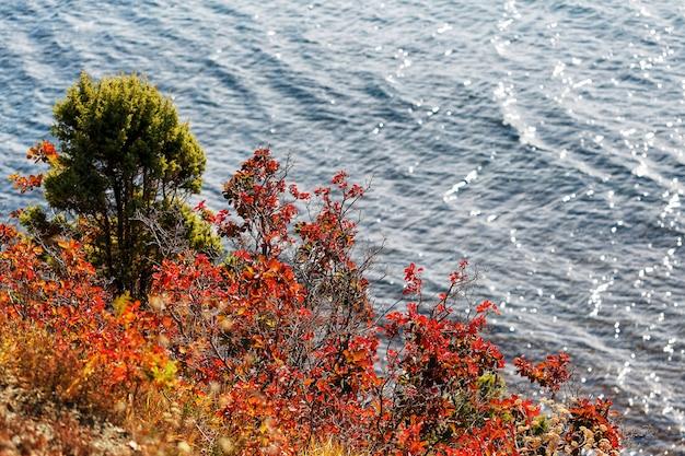 Forêt d'automne au bord de la mer
