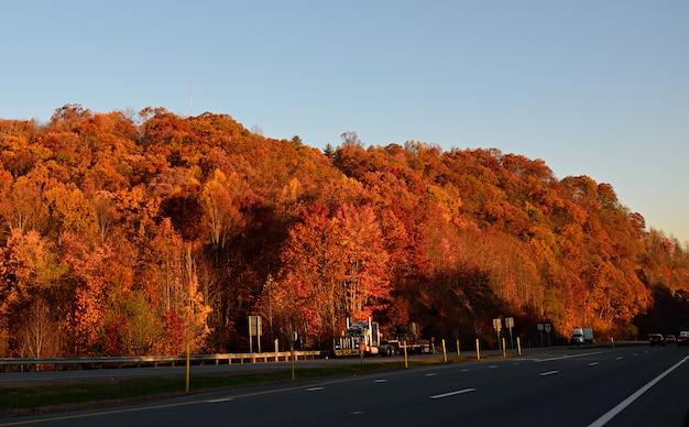 Forêt d'automne au bord de la route